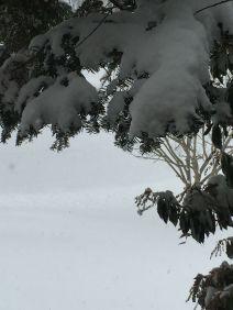 snowontree