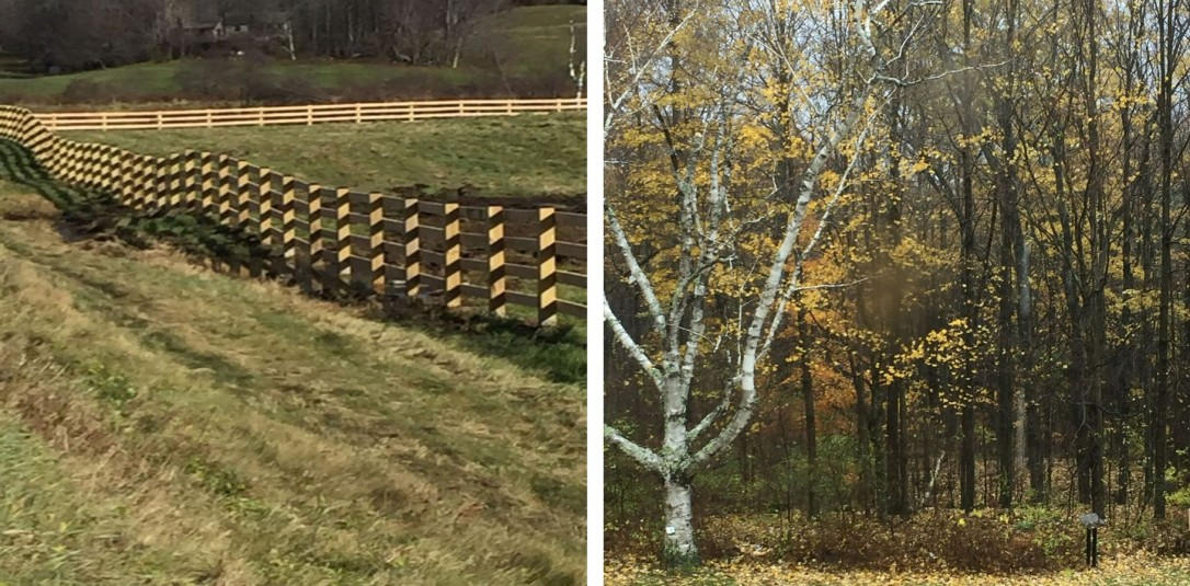 fence and trees